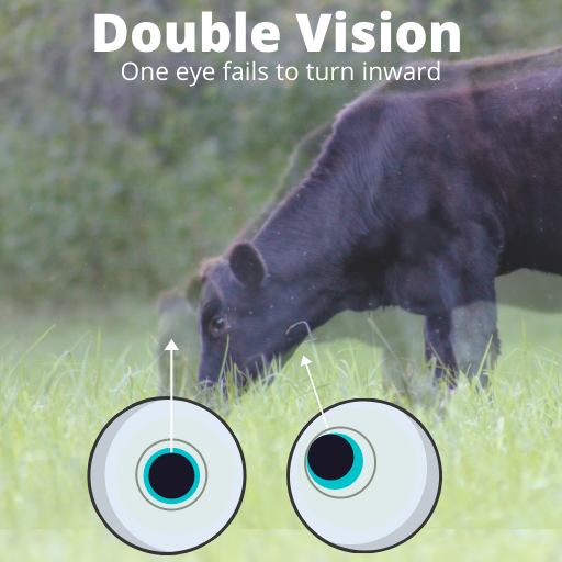 cow overlaid with a faint blurry cow and eyes below showing the pupil alignment for double vision
